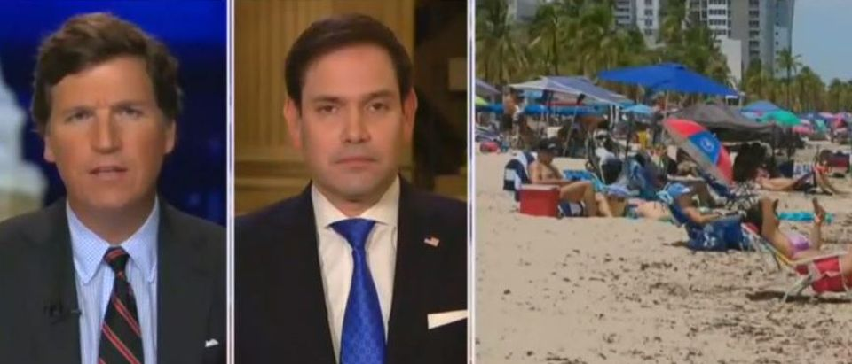 Marco Rubio decries potential travel ban (Fox News screengrab)