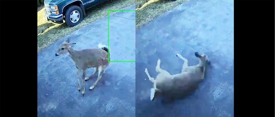 Deer_Garage_Door