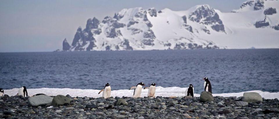 UN-CLIMATE-TOURISM-TRANSPORT-SEA-ANTARCTICA