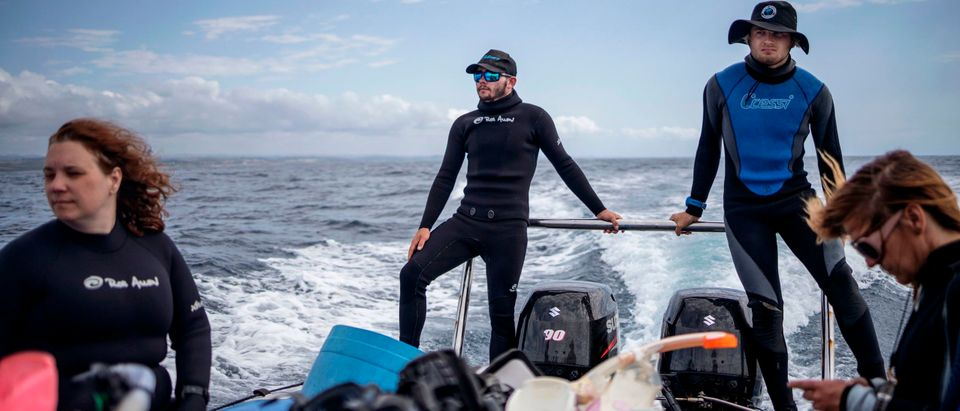 SAFRICA-ENVIRONMENT-OCEAN-SHARKS