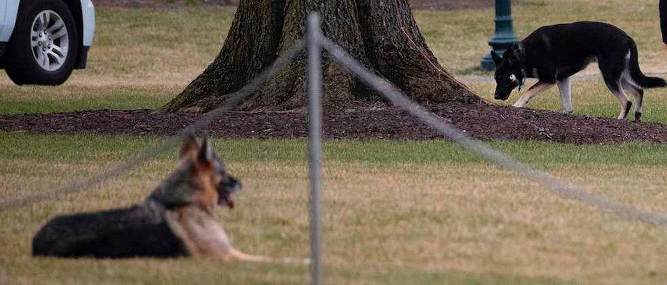 US-POLITICS-BIDEN-DOGS