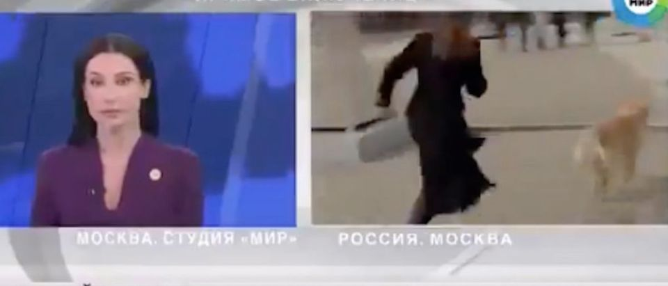Reporter_Chases_Dog