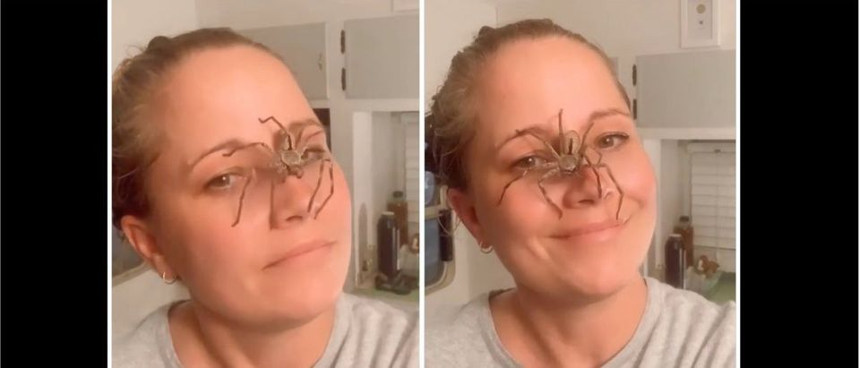 Spider Video (Credit: Screenshot/Instagram Video https://www.instagram.com/p/CM4MdtMDc_n/)