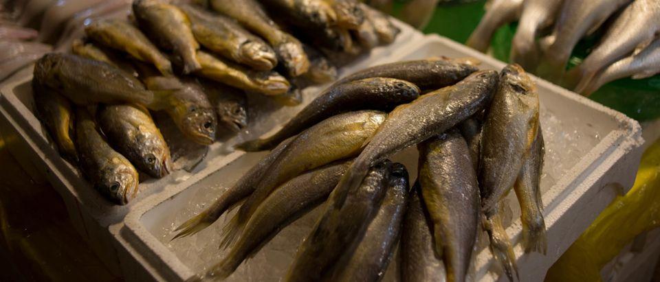 SKOREA-FISHING-TRADE