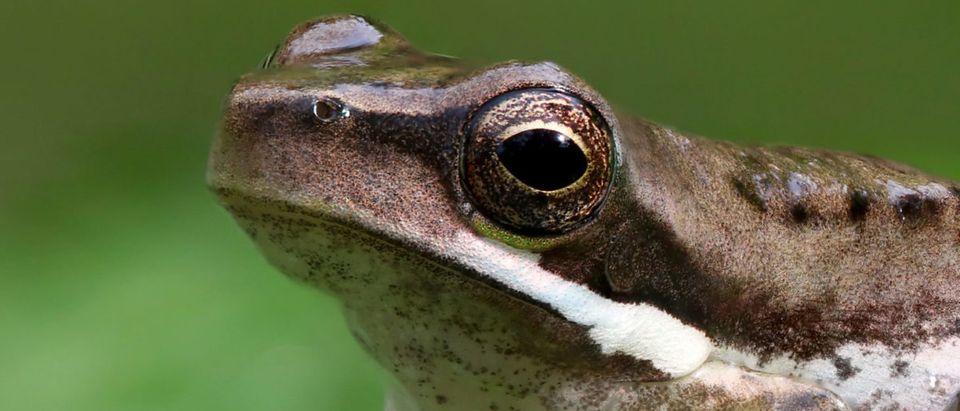 Frog (Credit: Shutterstock/Ken Griffiths)