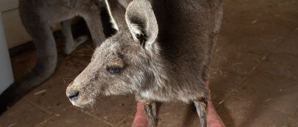 The Survivors: Portraits of Australian Wildlife Following Fires And Drought