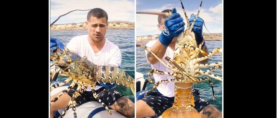 Lobster (Credit: Screenshot/TikTok https://www.tiktok.com/@ybsbrodie/video/6958219566132579586)