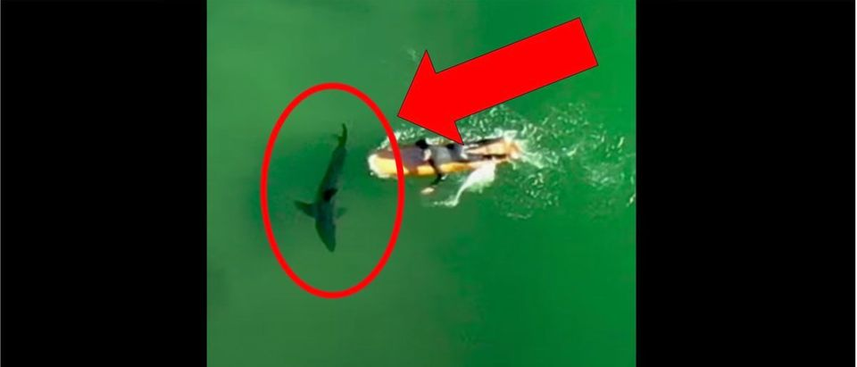 Shark Video (Credit: Screenshot/YouTube https://www.youtube.com/watch?v=wFhqmLCqEu8)