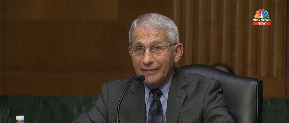 Anthony Fauci Senate Hearing May 11, 2021. (screenshot/YouTube)