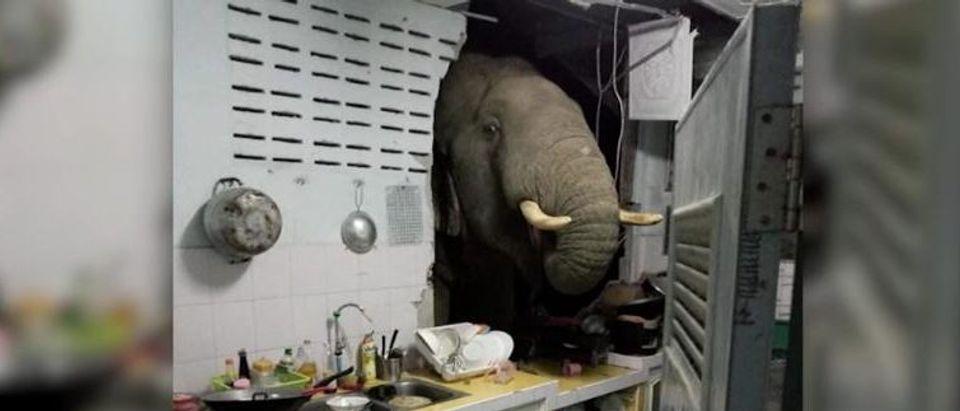 210622143212-elephant-thailand-exlarge-169