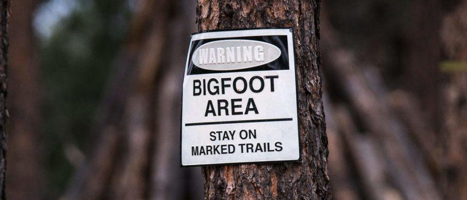 Bigfoot (Credit: Shutterstock/CineBlade)
