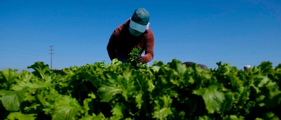 US-VIRUS-HEALTH-FOOD-AGRICULTURE