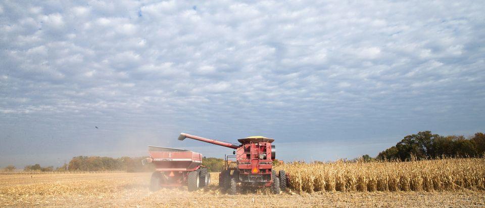 Iowa Farmers Harvest Crops As Colder Weather Brings Season's End Near