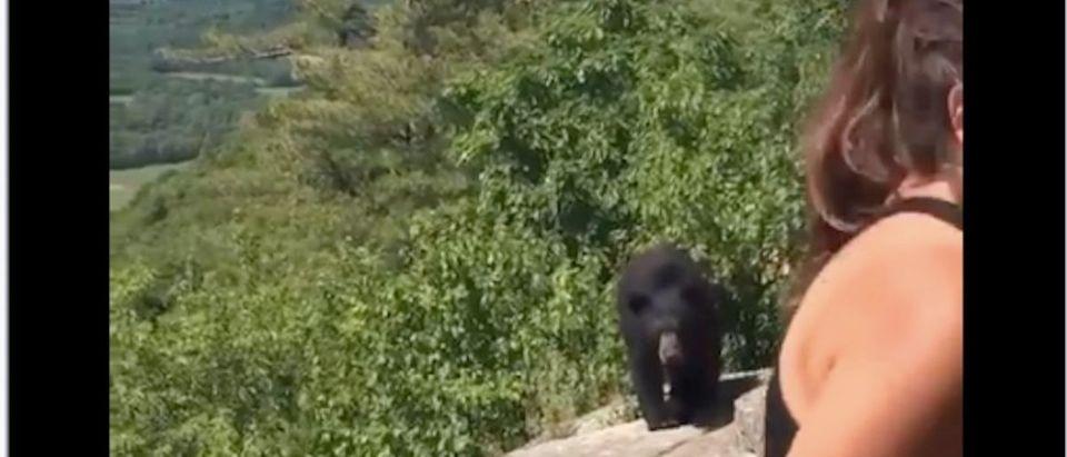 Hikers Meet Bear