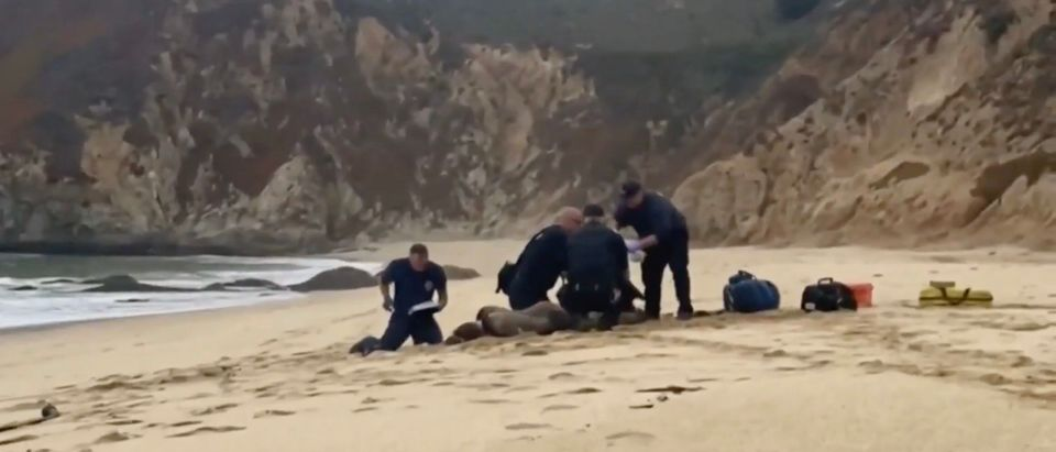 Man Attacked By Great White Shark in San Francisco