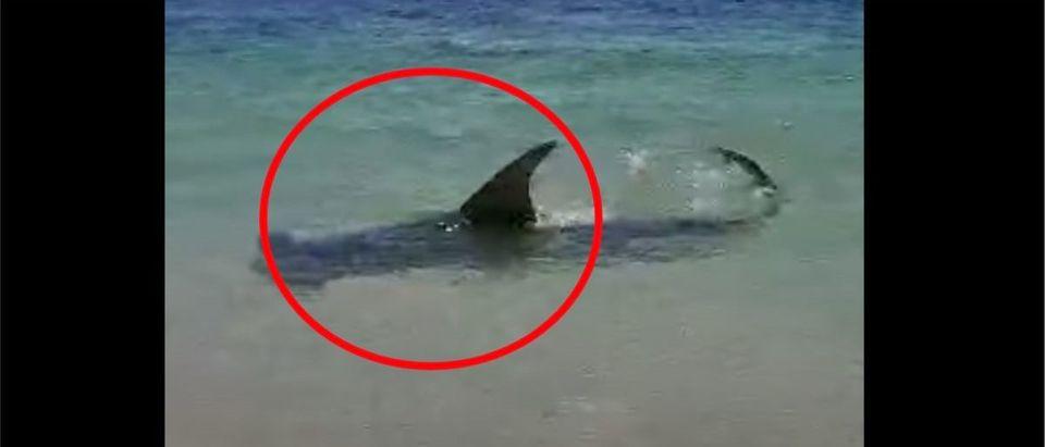 Florida Shark (Credit: Screenshot/YouTube https://www.youtube.com/watch?v=4OXQL_e8e-A)