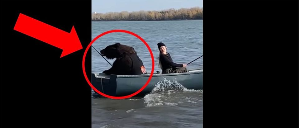 Bear Fishing Video (Credit: Screenshot/YouTube https://www.youtube.com/watch?v=O9707KjRq9A)