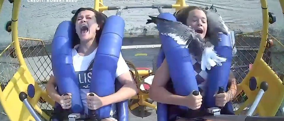 Seagull Flies Right Into Girl On Ride