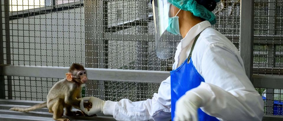 NIH Spent $140 Million On Animal Testing In Foreign Countries Last Year, Watchdog Group Finds