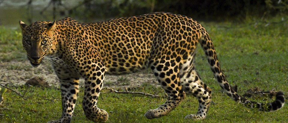 SRI LANKA-ENVIRONMENT-ANIMAL