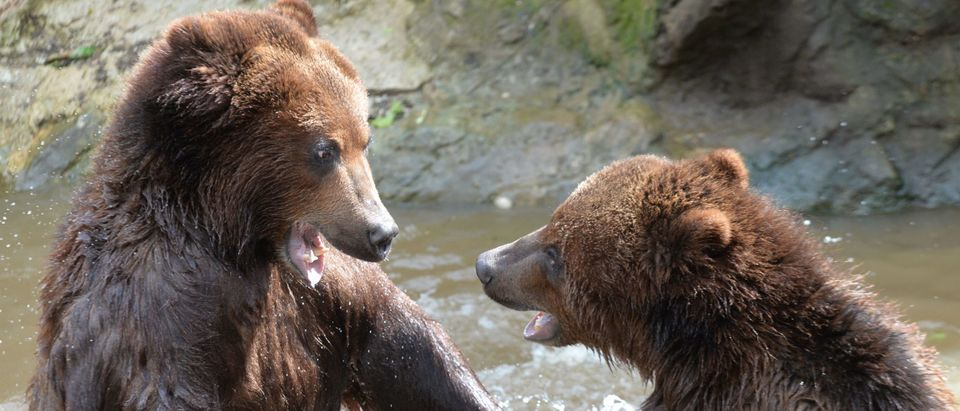 FRANCE-ANIMALS-ZOO-GRIZZLY-BEAR