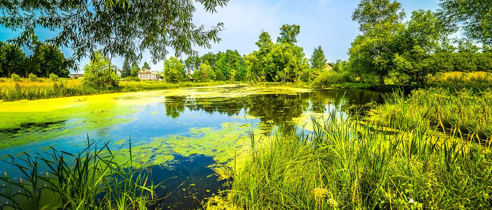 Pond. This image does not reflect the pond in the story [Shutterstock]