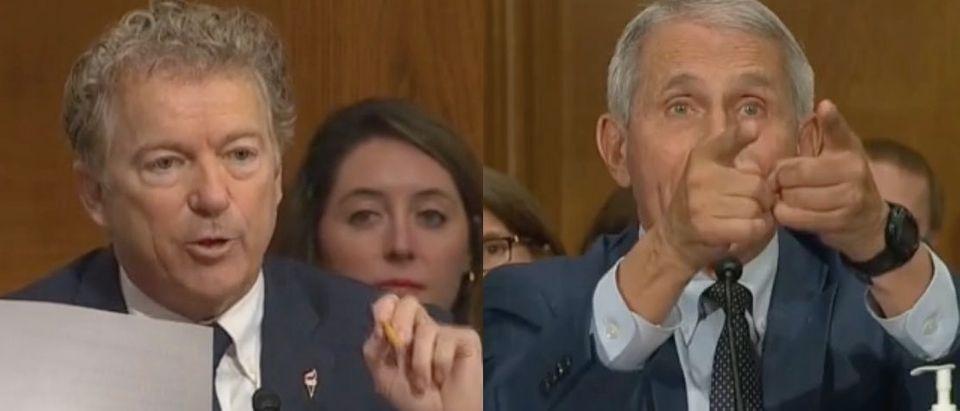 Rand Paul and Fauci clash in Capitol Hill hearing. Screenshot/C-Span