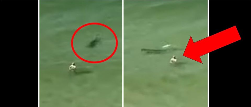 Shark Charge (Credit: Screenshot/YouTube https://www.youtube.com/watch?v=EPfP0E8ucnw)