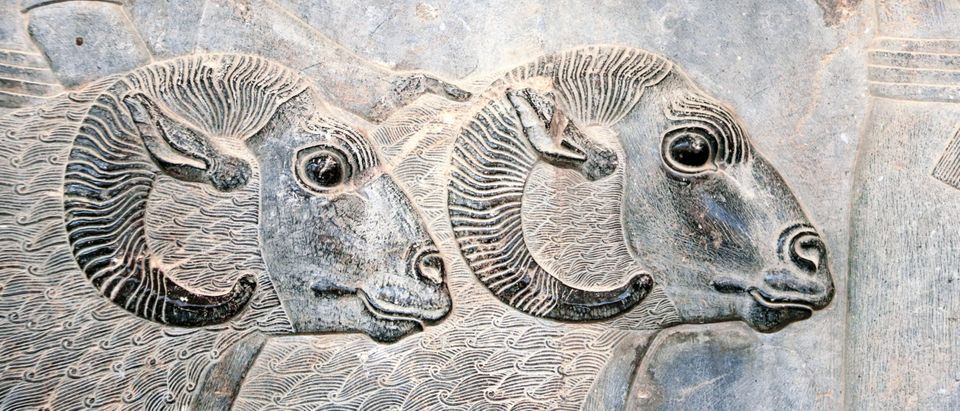 ancient sheep, finding, biology, mummy, science, DNA
