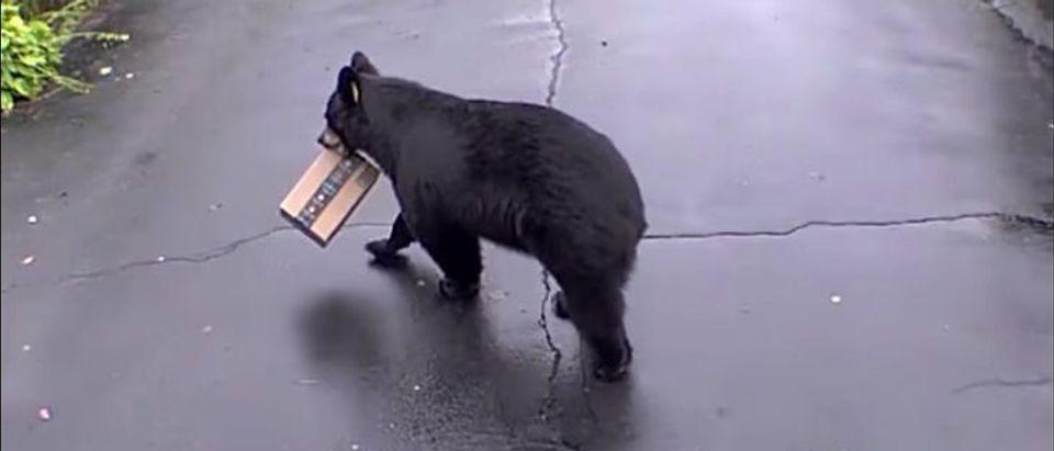 Bear Steals Package