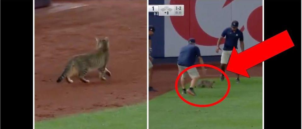 Yankees Cat Video (Credit: Screenshot/Twitter Video https://twitter.com/JomboyMedia/status/1422378779100520448)