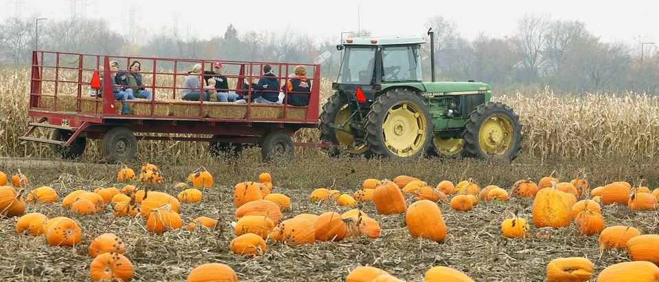 PRAIRIE VIEW, IL - OCTOBER 28: A hay-ride passes through a pumpkin patch October 28, 2004 at Didier Farms in Prairie View, Illinois. (Photo by Tim Boyle/Getty Images)