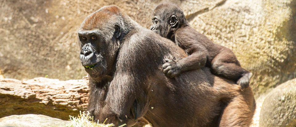 Animals At Taronga Zoo